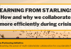 LEARNING FROM STARLINGS: How and why we collaborate more efficiently during crisis